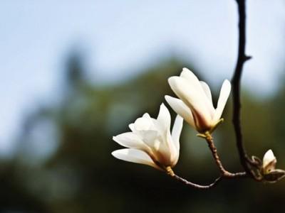 索达吉堪布:什么是异熟果、等流果、增上果、士用果